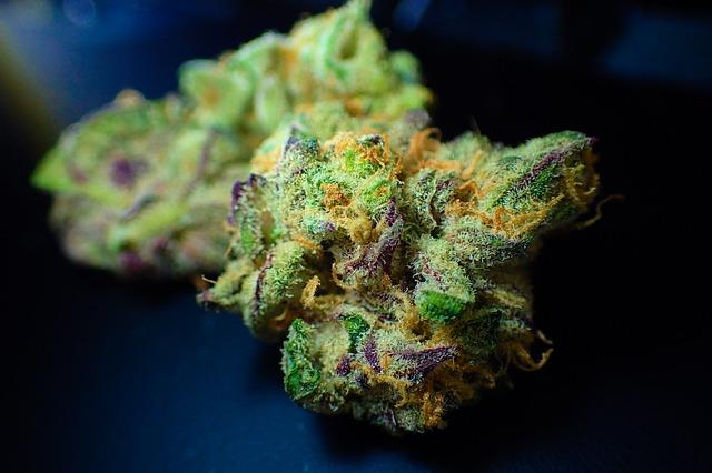 marihuana ako investícia